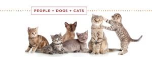 kitten adoption showcase