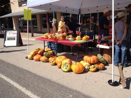 Festival Photo - Pumpkins