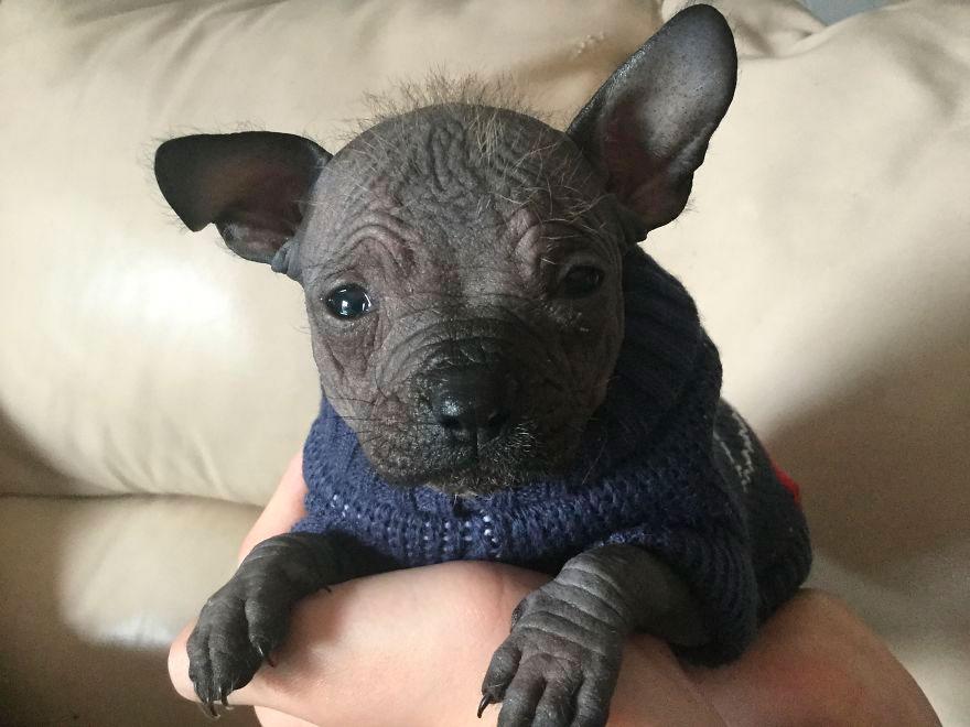 Родился щенок собаки похожий на маленького слоненка. Фотография этого песика обязательно вызовет у вас улыбку