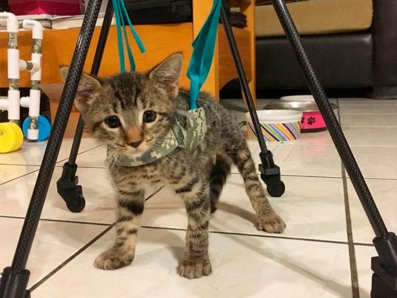 В приюте решили сделать котенку специальный механизм, с помощью которого, он сможет передвигаться.