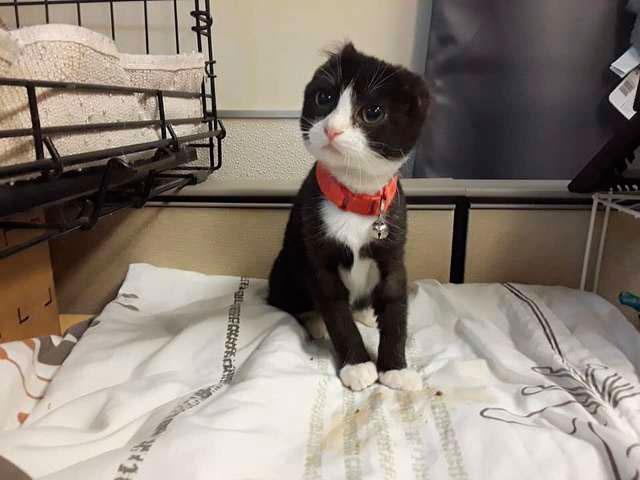 Кошка без ушей и хвоста обрела новый дом