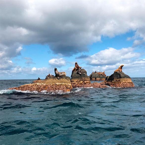 Уникальный природный остров полюбили морские львы