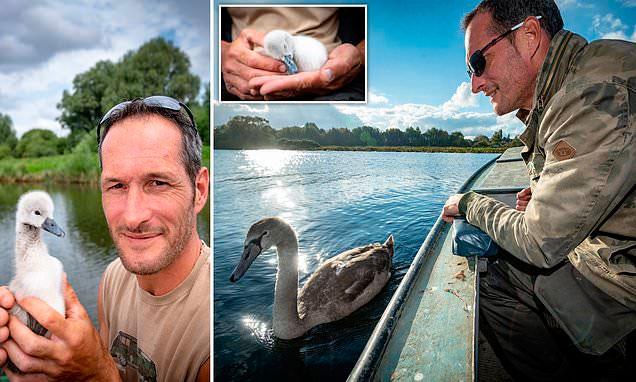 Волонтеры позвонили Робу и предложили забрать лебедя