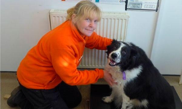 Волонтеры надеются, что пес сможет сбросить вес