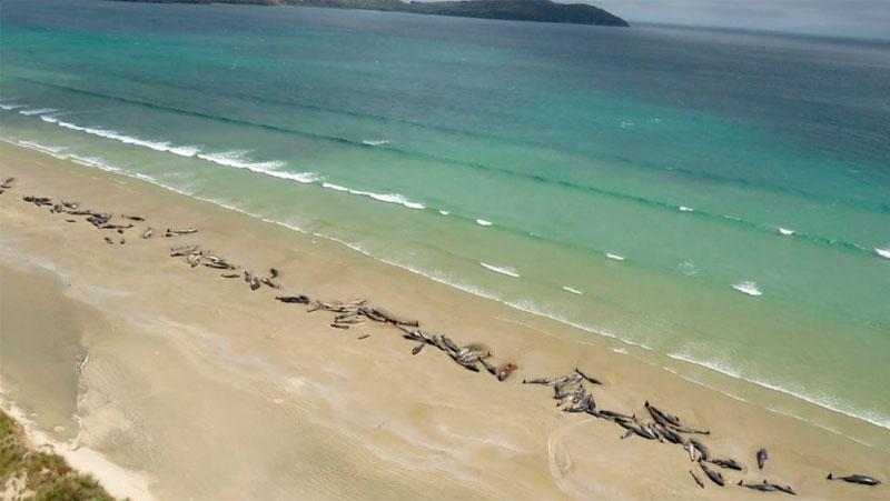 Около 140 дельфинов погибли в Новой Зеландии