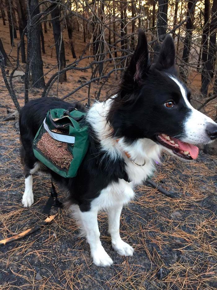 Через специальную сетку, во время бега собак, семена выпадали из мешков