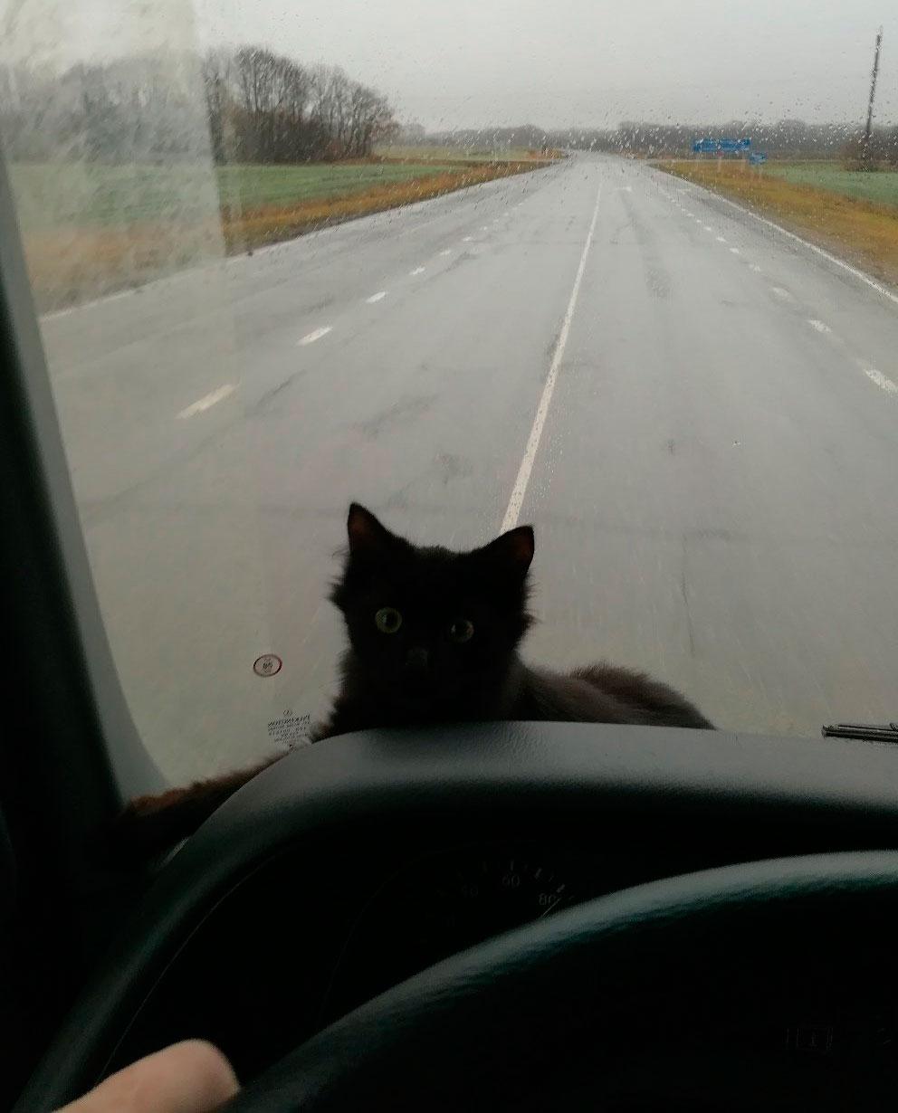 кошка составляет ему компанию во всех рейсах