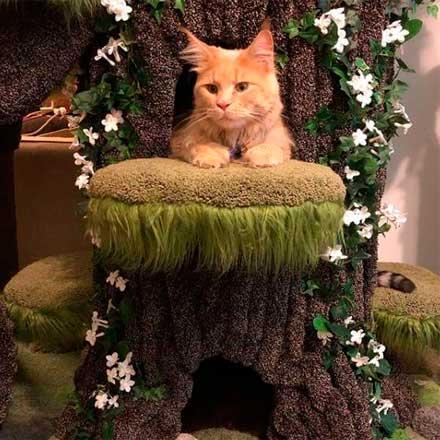 коты в восторге от дерева
