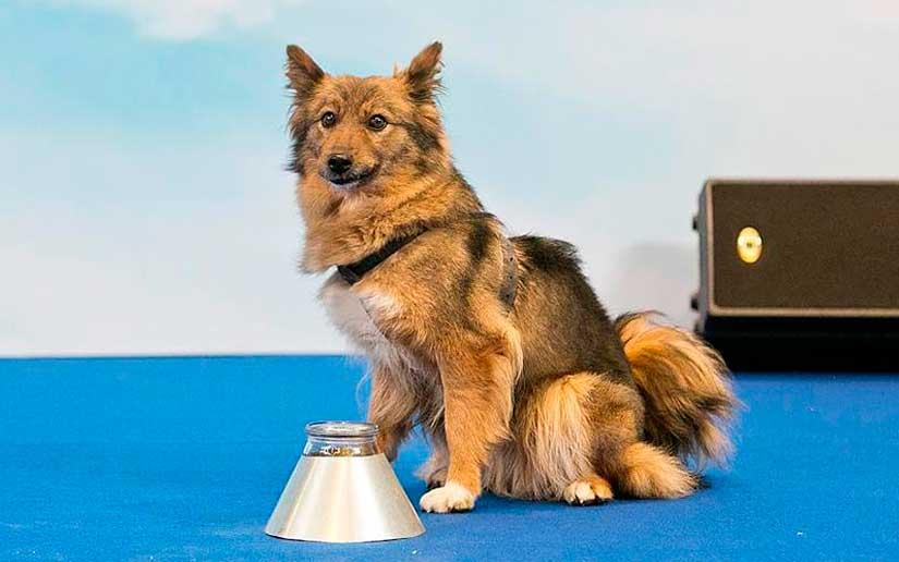Шалайка – новая порода собак