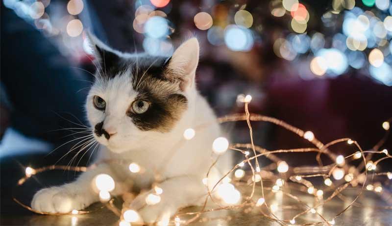 Как уберечь собаку и кошку от новогодних украшений