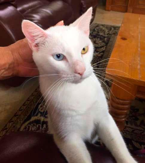 Бездомного кота спасли от смерти