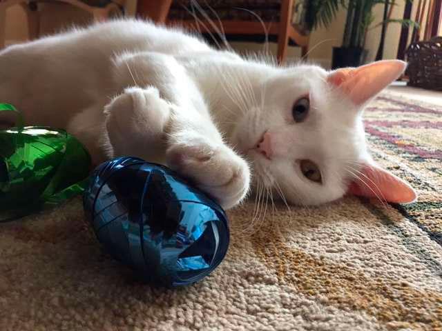 Оказалось, что у кота гетерохрония