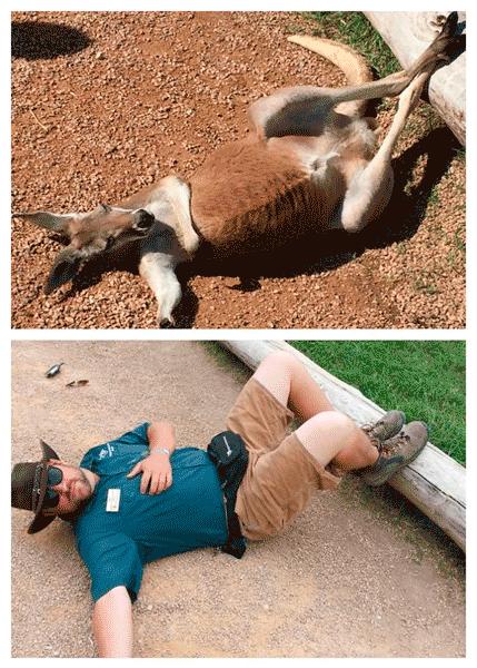 Смотритель Джим прилег как кенгуру