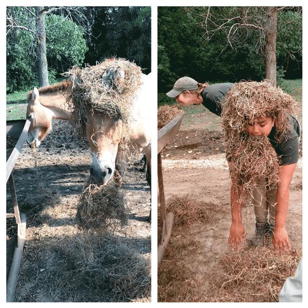 Работники зоопарка копируют поведение верблюдов