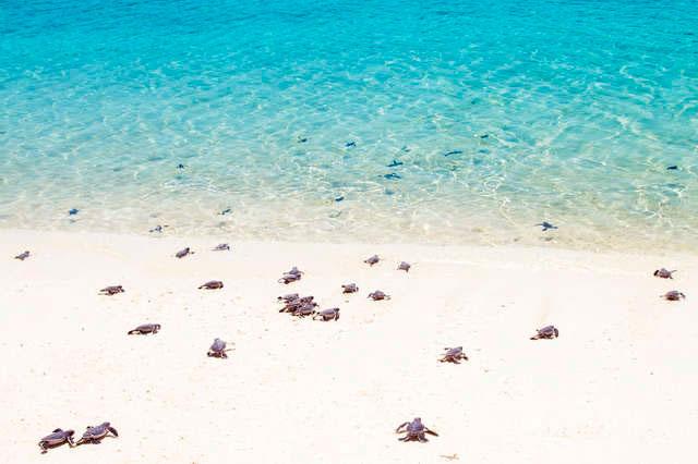Большинство видов черепах возвращаются в то место, где сами родились