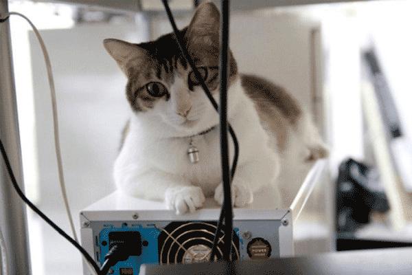 Коты на работе повышают продуктивность сотрудников