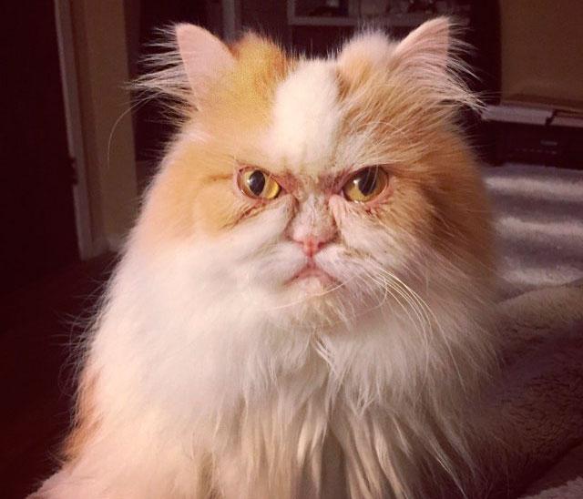 милейший котик со странной мордочкой