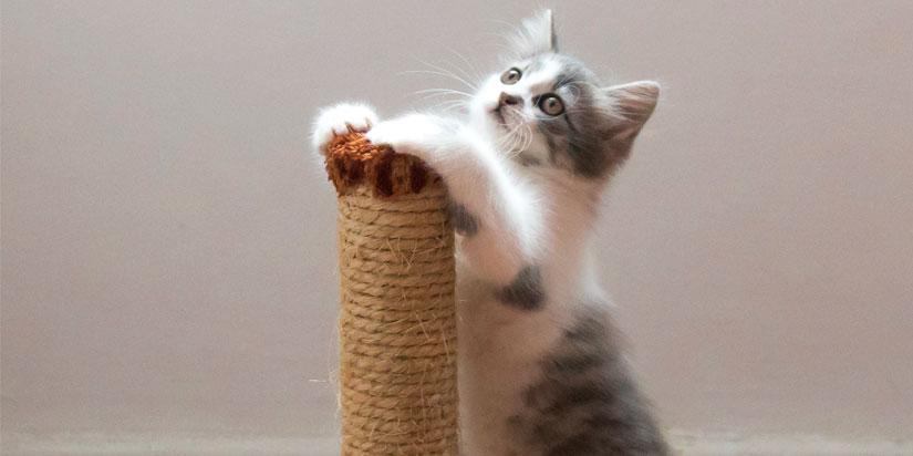 Как справиться с царапаньем и укусами котенка