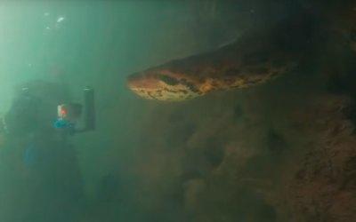 Во время погружения дайвер встретил анаконду