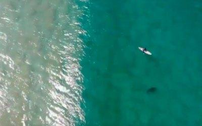 Дрон отпугнул акулу от серфера