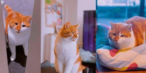 Как уменьшить стресс у кошки во время переезда в новый дом