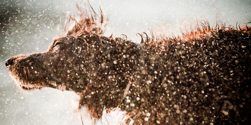 Груминг собак. Виды стрижек