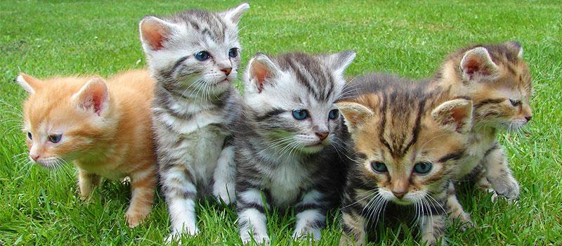 Когда кошке необходимо поменять корм. Кошка ждет потомство, или кормит молоком