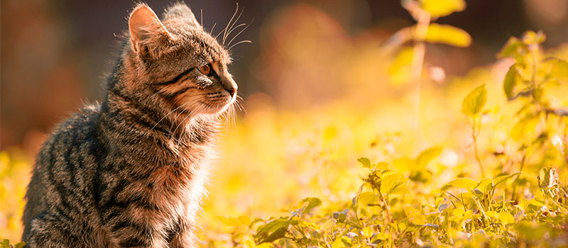 Когда кошке необходимо поменять корм. Аллергия у кошки