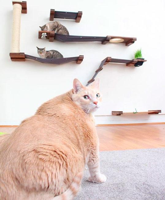 Очень толстого кота посадили на диету