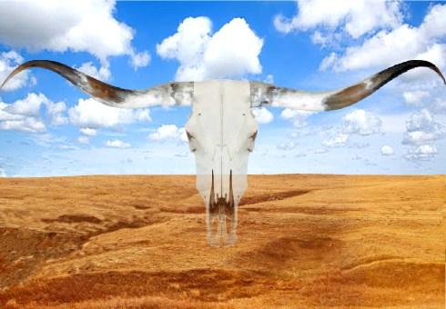 prairie vista