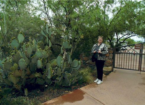 Rose & cactus
