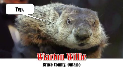 wiarton-willie