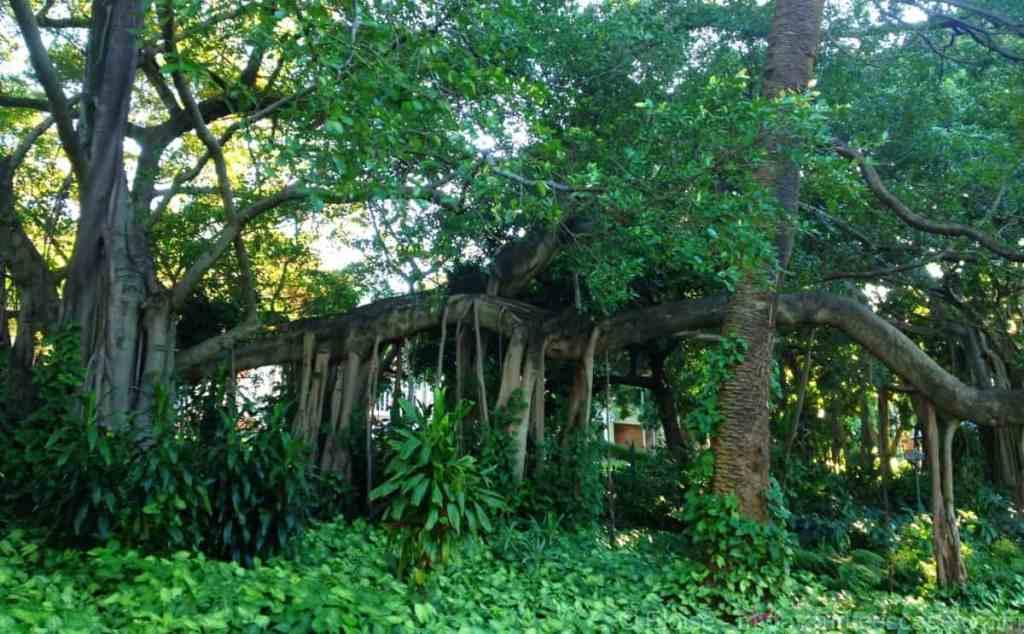 Brisbane Botanic Garden