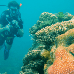 cairns great barrier reef diving