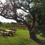 Mt Tamborine Winery - Witches Falls Gardens