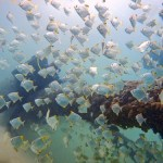 Scuba diving Gold Coast Seaway