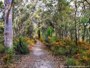 Gheerulla Valley Circuit (Mapleton National Park): why you should hike it (or not)