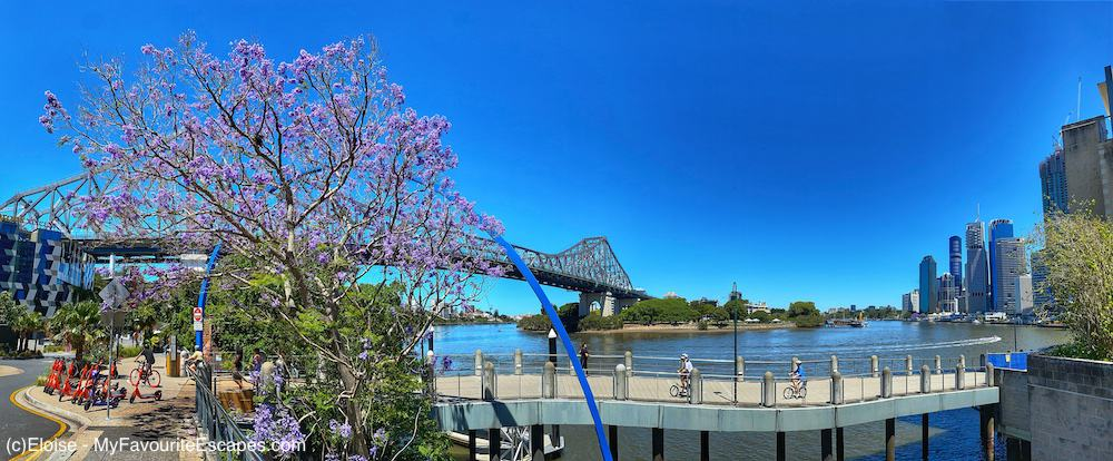 Jacaranda trees in Brisbane in front of the Story Bridge and the river, with the city nearby.