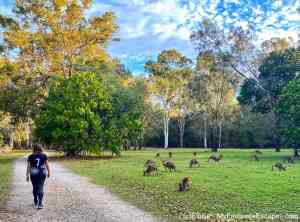 Coombabah Lake Conservation Park: see wild kangaroos and koalas on the Gold Coast