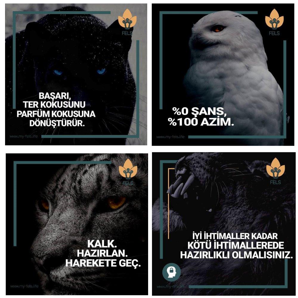 turkish content