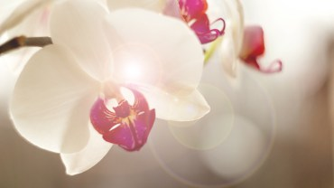Orchid 101