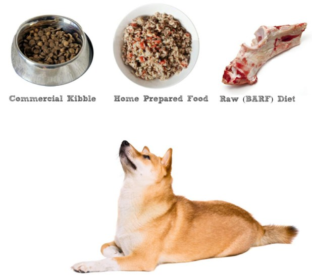 my dog dry food feeding guidelines