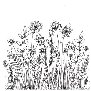 botanical doodles line drawings