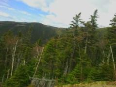 Mount Washington Pines 5.27.2017