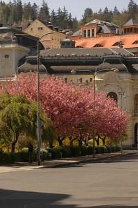 Весна, всё цветёт :-)