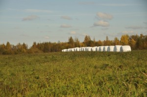 Уборка сена в Псковской области