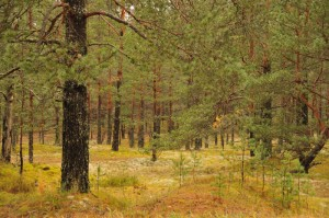 Природа по дороге в Ивангород