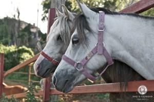 Лошади на Соборке