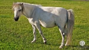 Пони на Соборке