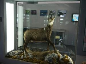 Музей на озере